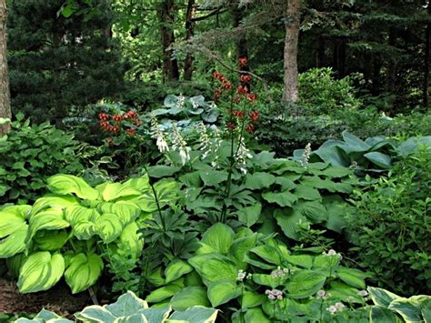 hosta garden ideas hosta planting garden ideas