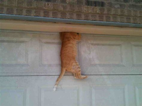 My Cat Fell Asleep On Top Of The Garage Door Then This Cat Doors For Garage Doors