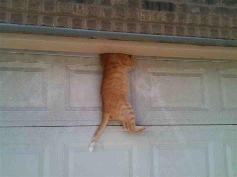 Garage Door Keeps Stopping My Cat Fell Asleep On Top Of The Garage Door Then This