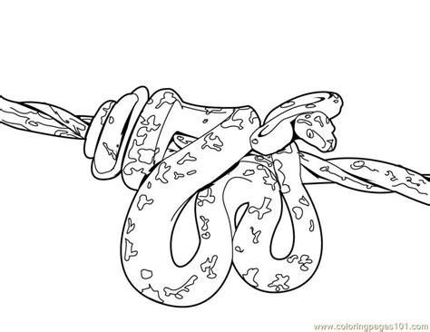 realistic lizard coloring pages reptile coloring pages realistic these reaic for grig3 org