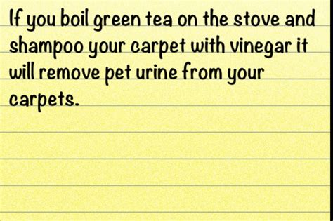 How To Remove Urine From Rug by Remove Pet Urine From Carpets Cleaning