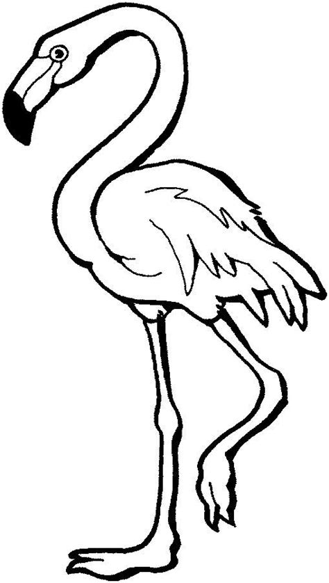 flamingo coloring page flamingo coloring page for free printable picture