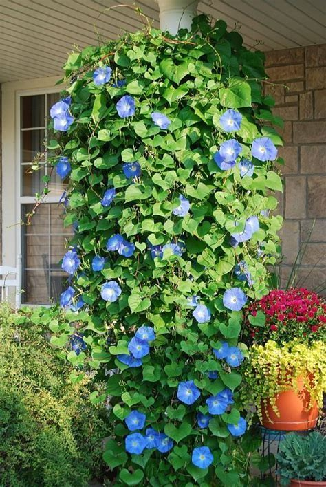 10 best ideas about hanging baskets on pinterest decorative hanging baskets hanging basket
