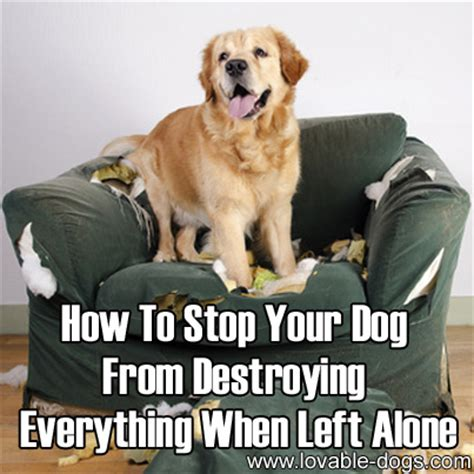 how to stop dog barking when left alone how to stop your dog 28 images how to stop your dog