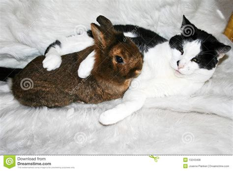 cat and cuddling cuddling cat and bunny royalty free stock photos image 13243408