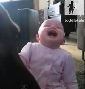 Hysterical Laughing Meme - enjoy a baby girl laughing hysterically at a dog eating