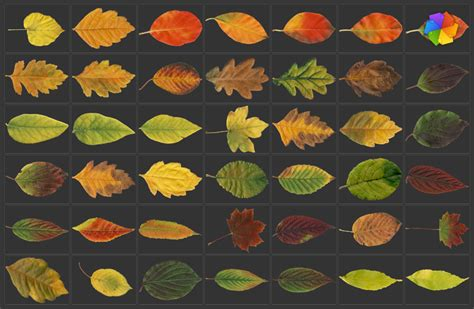 high resolution maple leaf deviantart high resolution leaves pictures by plaintextures on