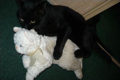 how to comfort a cat in heat 고양이 생리 고양이는 생리하지 않아요