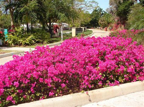 fiori varietà fiori da giardino piante per giardino variet 224 fiore
