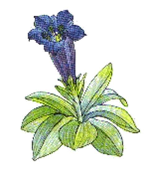 genziana fiore il linguaggio dei fiori su anime in viaggio