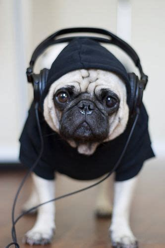 songs about pugs 25 best ideas about pug on pugs pug puppies and pug puppies