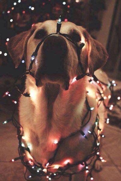 imagenes tumblr luces luces tumblr animales pinterest luces mascotas y