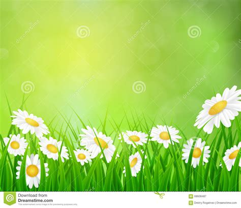 background design garden daisy vector background summer design stock vector