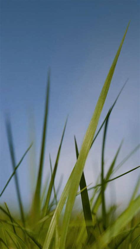 nokia grass  sky wallpaper  zaragil    zedge