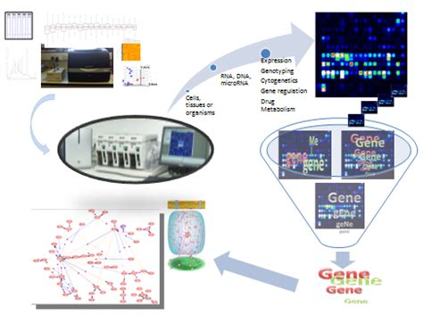 microarray workflow services centre for genome enabled biology and medicine