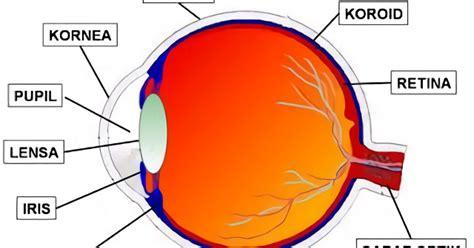 fungsi bagian struktur anatomi mata beserta gambar