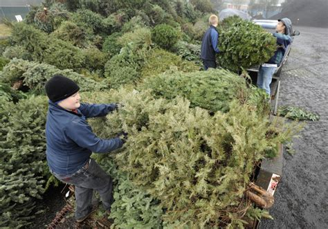 boy scouts assist with christmas tree recycling project