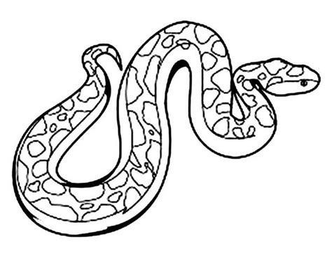 anaconda coloring page for kids coloring sky