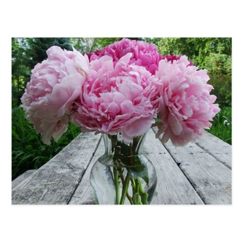 peonies in vase pink peonies peony flowers arrangement in vase postcard
