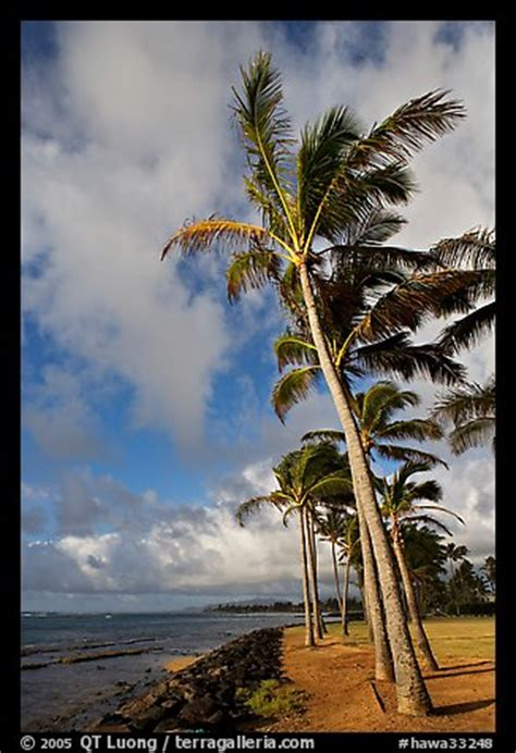 Hawa Acean Colour picture photo palm trees and kapaa early morning