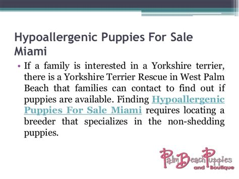 yorkie puppies for sale in west palm hypoallergenic puppies for sale west palm source to get puppi