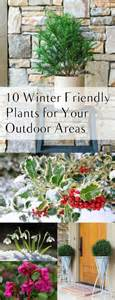 winter garden outdoor shopping 10 winter friendly plants for your outdoor areas page 2