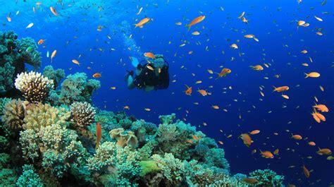 dive in scuba lykia world diving centre oludeniz fethiye turkey