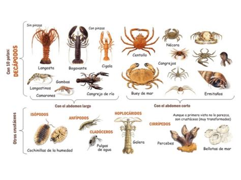 imagenes de animales marinos con sus nombres 11 animales invertebrados