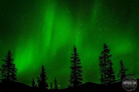 what causes northern lights alaska southern kiwi photography atlanta senior family pet