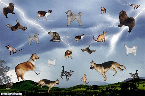 raining cats and dogs idioms pictures freaking news