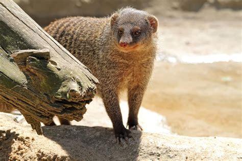 Zoologischer Garten öffnungszeiten by Willkommen Im Zoo Dresden Tiere Zum Anfassen Nah Im