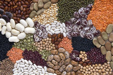 Low Calorie Main Dishes - beans and other nutritious legumes for low carb diets