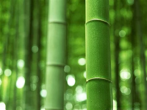 imagenes wallpaper bamboo wallpapers bamboo wallpapers
