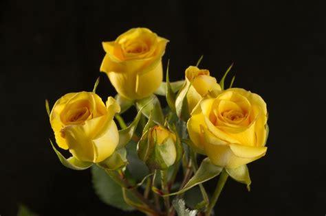 Sprei Rumbai Lovely spray roses flowers prime petals