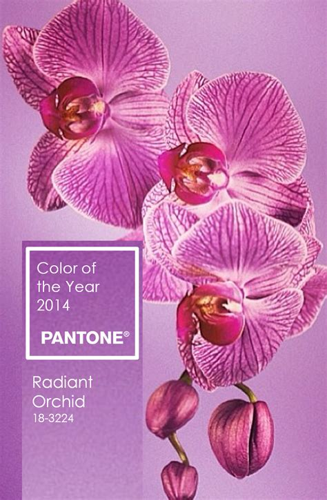 colour of the year radiant orchid design the life you love by tiffany hanken design radiant