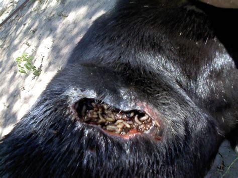 imagenes de animales fuertes dando otra oportunidad a un perro imagenes fuertes taringa