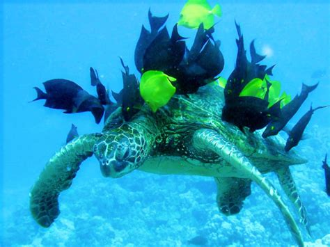 Green World Sea Fish of green sea turtle of sea