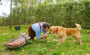 Uk Home Decor Blogs monty don feared the worst when his beloved retriever