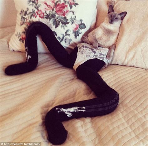 Pantyhose Meme - nice meowt fit disturbing new craze for dressing cats in