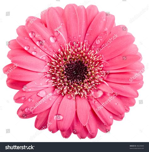 Flowery Top pink flower surface top view isolated on white