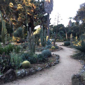 Stanford Botanical Garden The Arizona Cactus Garden At Stanford 207 Photos 29 Reviews Botanical Gardens