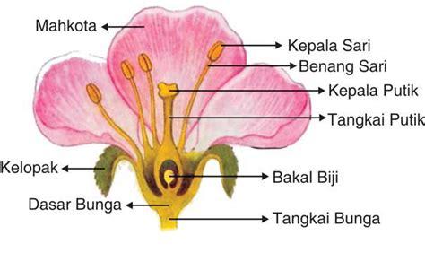 bagian bagian bunga sempurna wagu indonesia