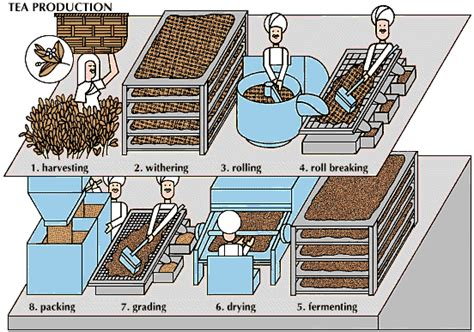How Tea Bag Is Made Used Components Industry Materials by Innovate Tea Tea Processing Technology
