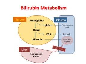 what metabolic by product from hemoglobin colors the urine yellow bilirubi to health clinic webhealth clinic web