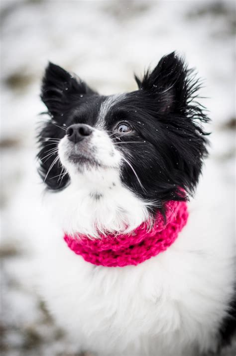 small puppy circle scarf pet scarf