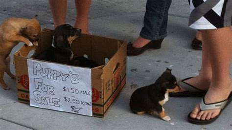 sell puppies puppies for sale on side of popsugar pets