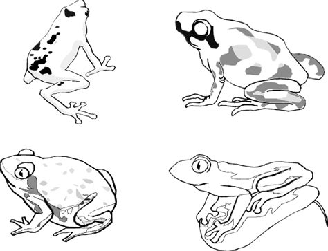 rainforest frog coloring page free coloring pages of rainforest frogs
