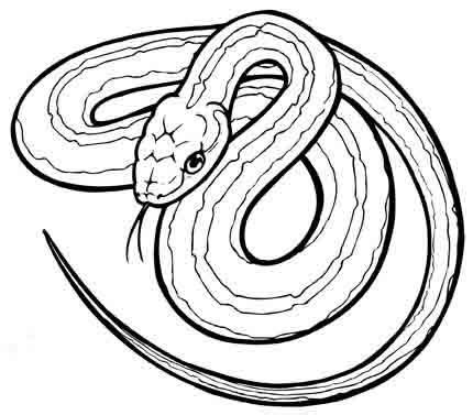 gopher snake coloring page vibora dibujalia dibujos para colorear animales