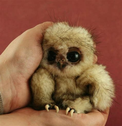 pictures of the cutest in the world ugliest cutest thing in the world baby owl animals