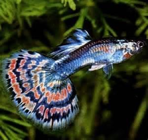 Aquascape Piranha Les 25 Meilleures Id 233 Es Concernant Aquarium D Eau Douce